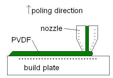 Amazing Piezoelectric Polyvinylidene Fluoride